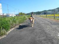 散歩20120926-4