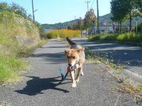 散歩20120927-4