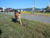 散歩20120928-3