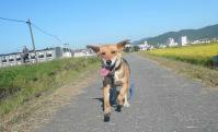 散歩20120928-4