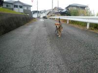 散歩20120929-1