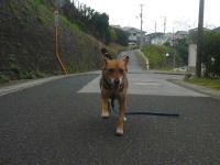 散歩20120929-2