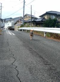 散歩20120930-1