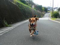 散歩20120930-2