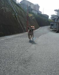 散歩20120930-3