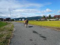 散歩20120930-5