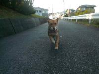 散歩20121023-3