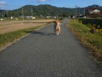 散歩20121023-4