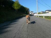散歩20121024-1