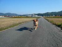 散歩20121024-2