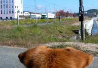 散歩20121024-3
