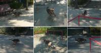 散歩20121024-4