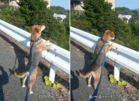散歩20121026-1
