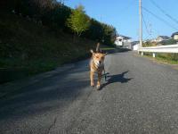 散歩20121026-2
