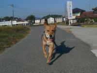 散歩20121026-3 1