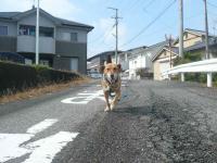 散歩20121028-1