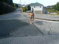 散歩20121028-2