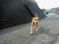 散歩20121028-3