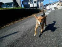 散歩20121029-1