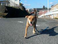 散歩20121029-2