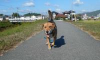 散歩20121029-4