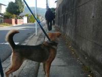 散歩20121029-5