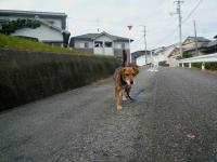 散歩20121031-1
