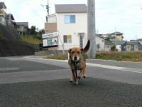 散歩20121031-2
