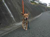 散歩20121031-3