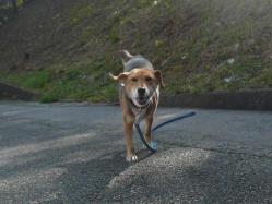 散歩20121121-1