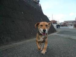 散歩20121121-2