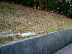散歩20121122-2