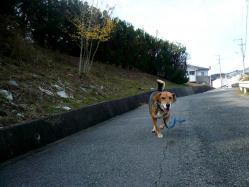 散歩20121122-3