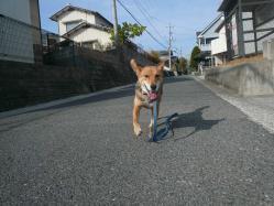 散歩20121122-4