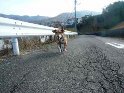 散歩20121125-1