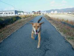 散歩20121125-3
