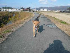 散歩20121125-5