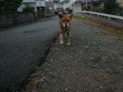 散歩20121126-1
