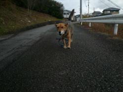 散歩20121126-2