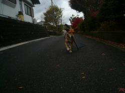 散歩20121126-4