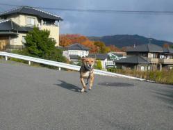 散歩20121127-3