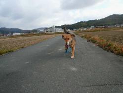 散歩20121127-4