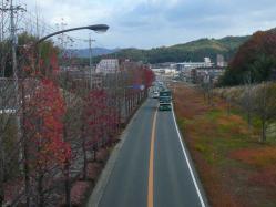 散歩20121127-5