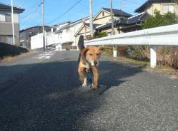 散歩20121128-1