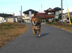 散歩20121128-3