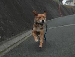 散歩20121129-1