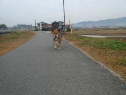 散歩20121129-2