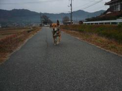 散歩20121129-3