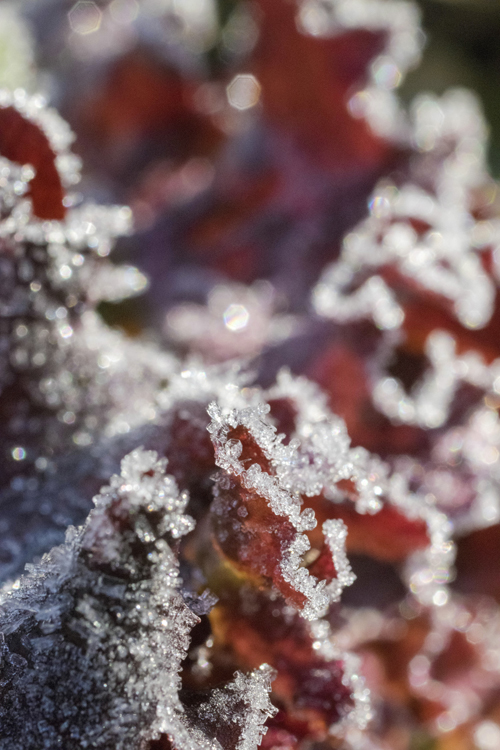 frost_14_10_15_7.jpg