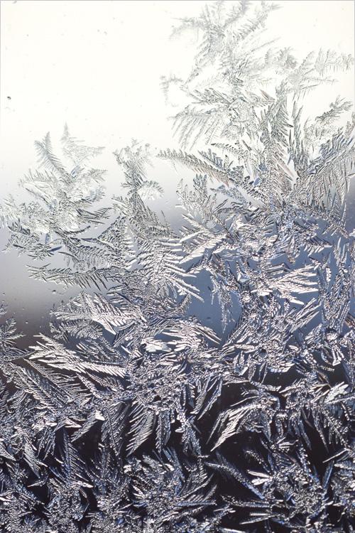 frost_14_1_28_5.jpg